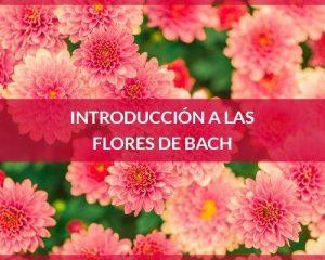 Introducción flores de Bach